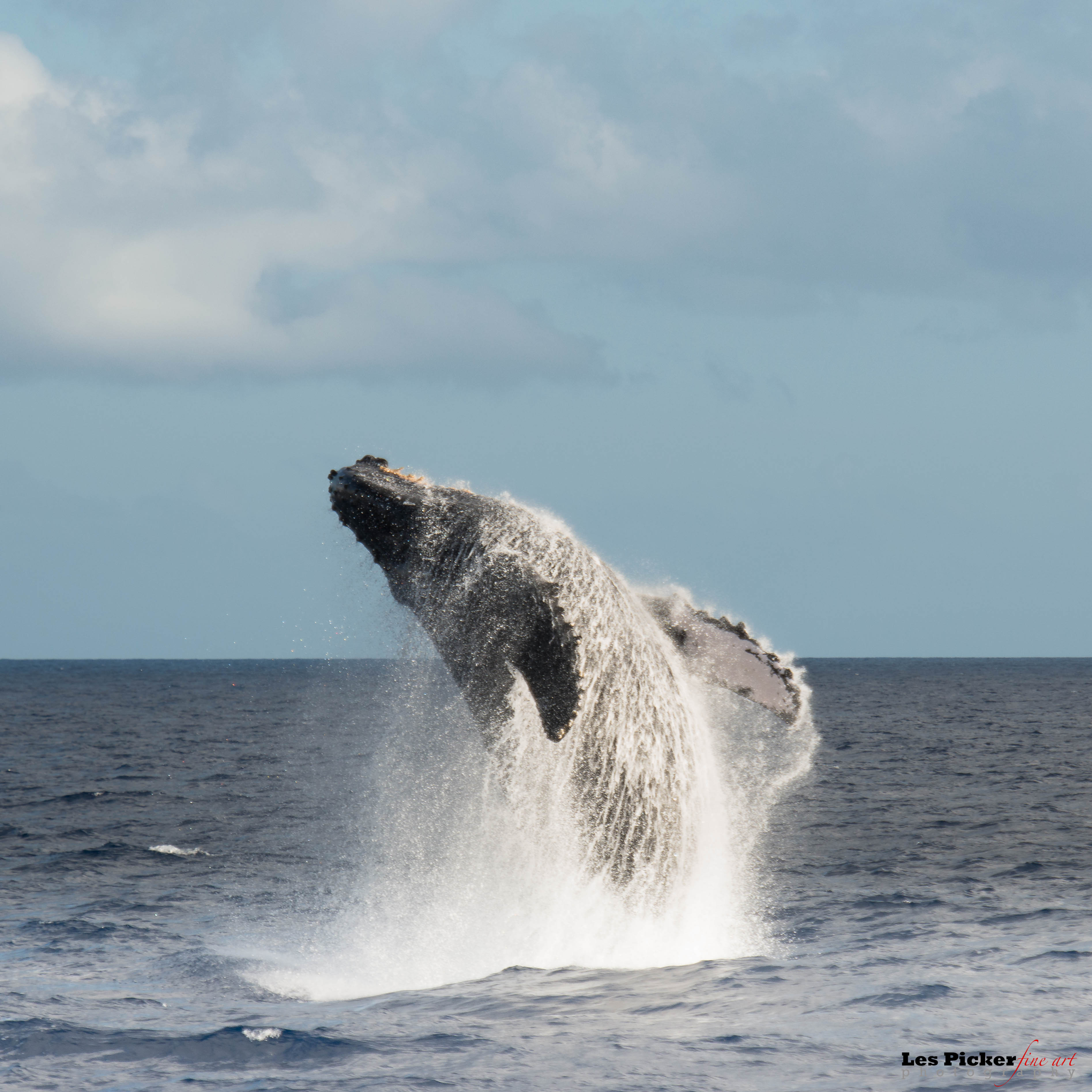 Photographing Whales off Maui