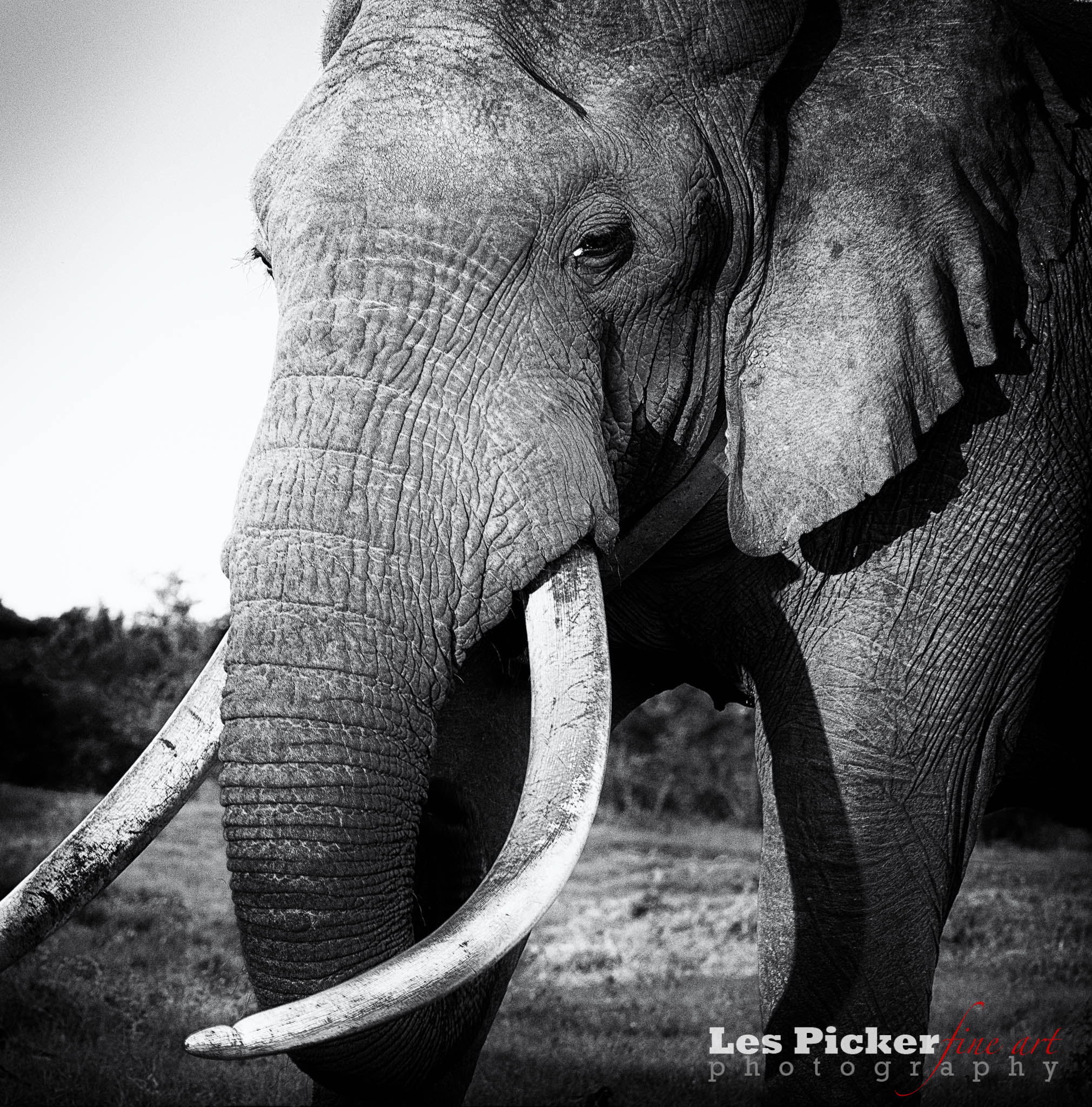 pink elephants and trauma recovery