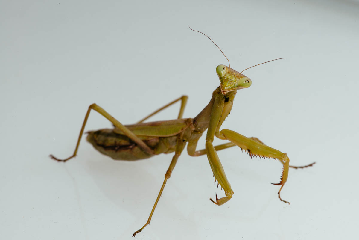 News Posts Tcash Vaganza 17 Us Baby Mosquito Sticker Creepy Crawly Macro Photographs